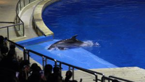 Captive dolphins suffering in tiny tanks | Wildlife. Not Entertainers.